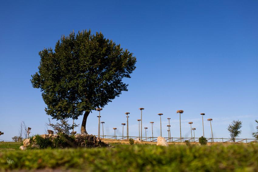 palacio-arenales-fontecruz-fotografo-caceres-iker-y-sara-nano-018